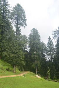 bir billing paragliding rajgundha (35)